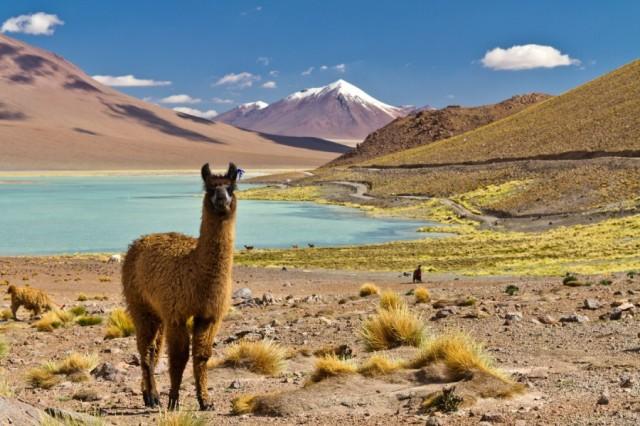 chile-norden-atacama-altiplano-san-pedro-laguna-salzsee-uyuni-bolivien